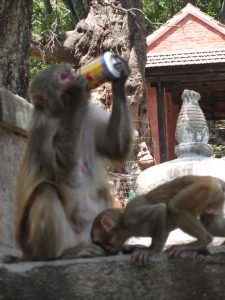 Apen Kathmandu - Therapy Trek